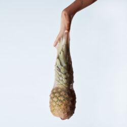 ananas_4